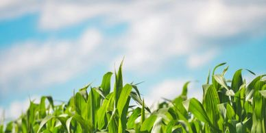 Commercial Drone Professional: AgTech companies collaborate to increase yields